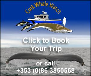Book your trip with Cork Whale Watch, West Cork, Ireland