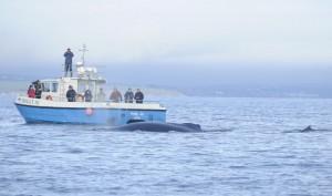 The Holly Jo, Cork Whale Watch, West Cork, Ireland