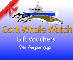 Whale Watching Gift Vouchers from Cork Whale Watch, West Cork, Ireland